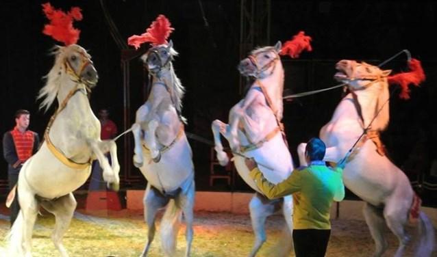 De paarden van Franz Renz. Foto: PR