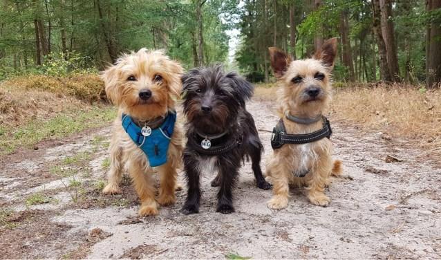 Mo, Minni en Marley gaan graag samen aan de wandel
