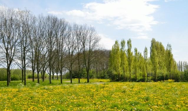 In het voorjaar is het Bernissegebied vol kleur.
