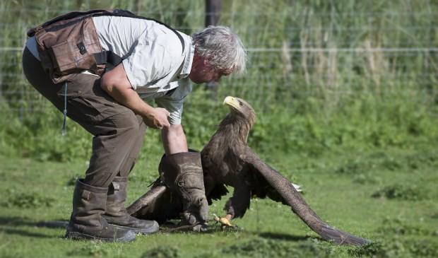 Tijdens demonstraties vertelt Ruben het publiek alles over het natuurlijk gedrag van roofvogels.