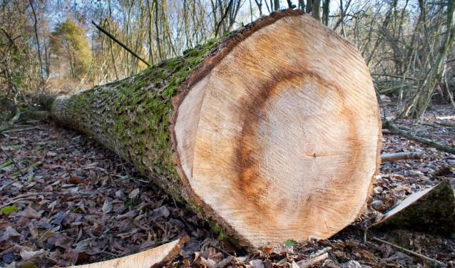 Soms is het onduidelijk waarom bomen gekapt worden.