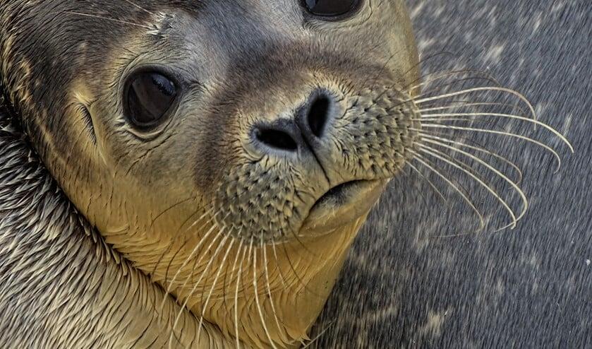 Het doel was dat zeehondenpups en hun moeders rust krijgen tijdens de zoogperiode.