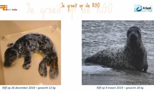 Riff was flink wat kilootjes aangekomen en kreeg met haar 28 kg groen licht van de arts om naar open zee te mogen.