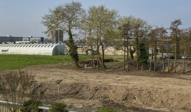 De paar bomen die er nog staan bieden een treurige aanblik