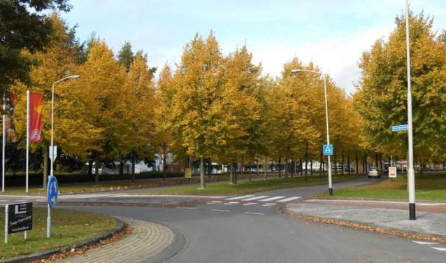Het weer oogt dan wel zomers, toch krijgen de bomen langzaam aan herfstkleuren.