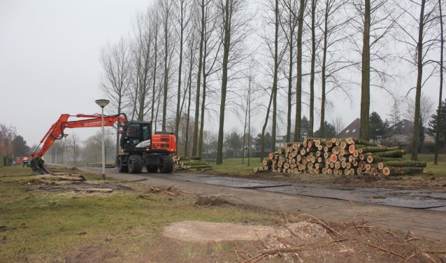 De hete zomer vol met hittegolven heeft honderden bomen in Halderberge het leven gekost. ARCHIEFFOTO