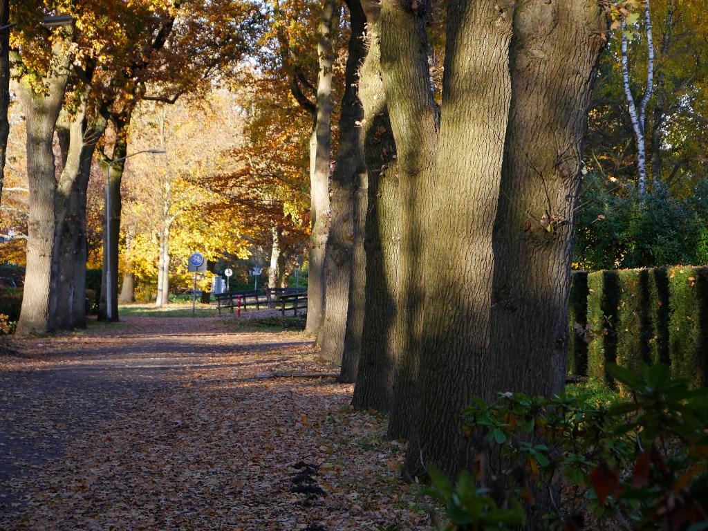 Herfst in Breda, november 2018. Foto: Wesley van der Linde/Groennieuws.nl © BredaVandaag