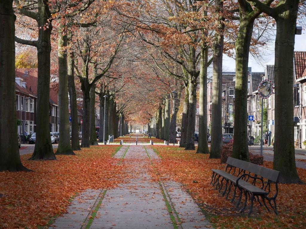 Herfst in Breda, november 2018.