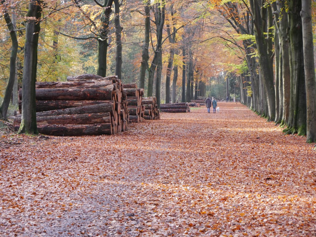 Herfstkleuren in het bos. Foto: Wesley van der Linde/GroenNieuws.nl © BredaVandaag