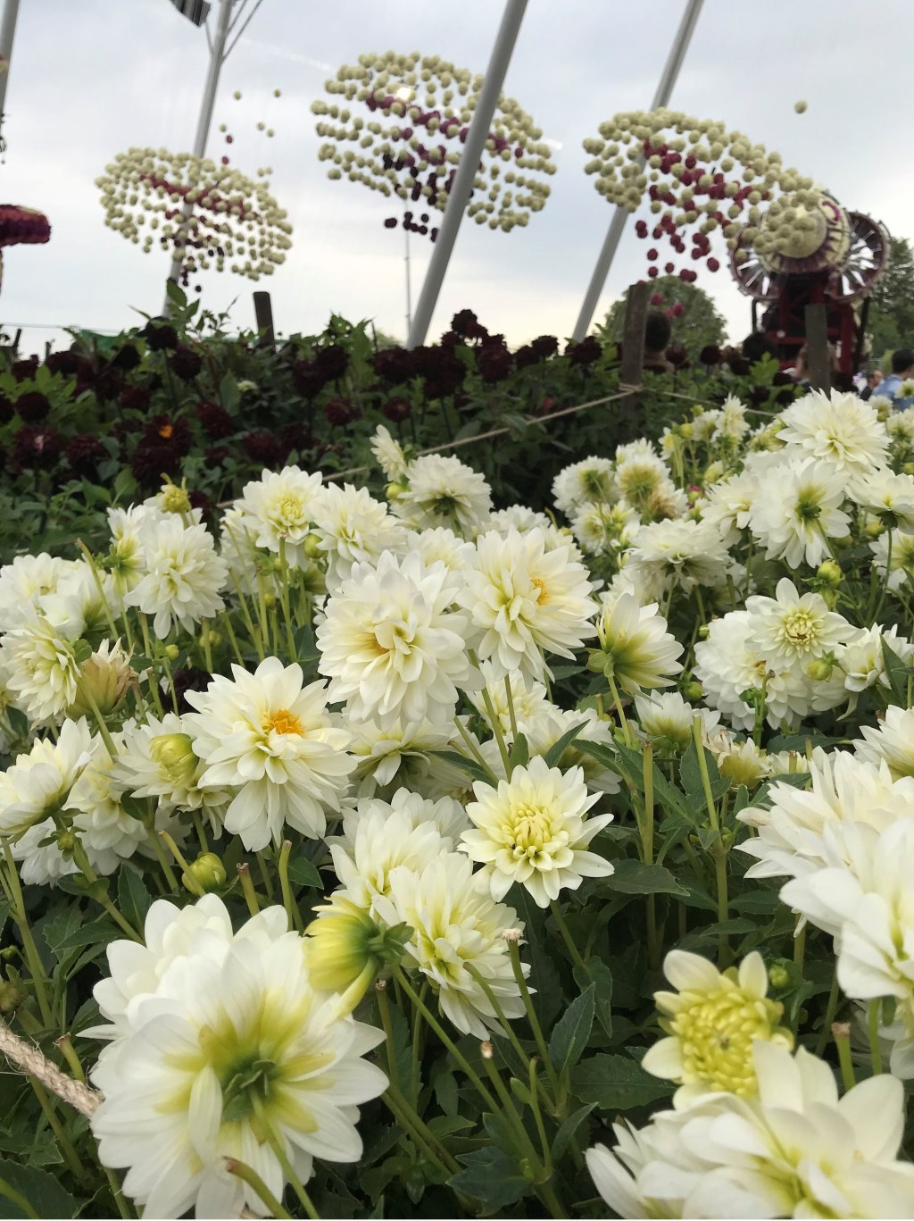 Beste bloemenfoto Foto: Ria Höngens  © Internetbode