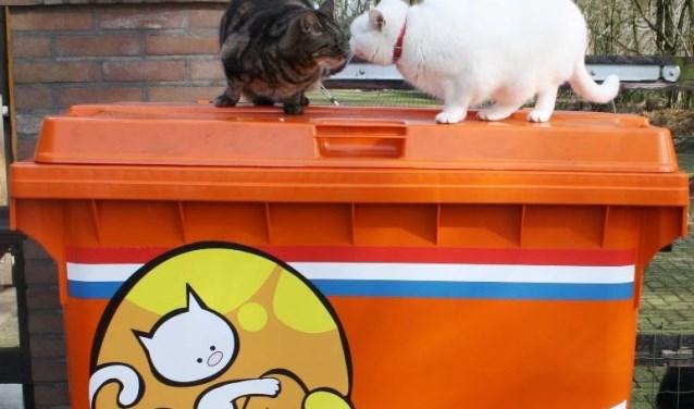 Eenzelfde container hoort voor Dintelkat in Dinteloord te staan. Op de foto zijn de katten Robijntje en Tinus te zien van Stichting Hanna die in De Achtste Hemel kwamen wonen.