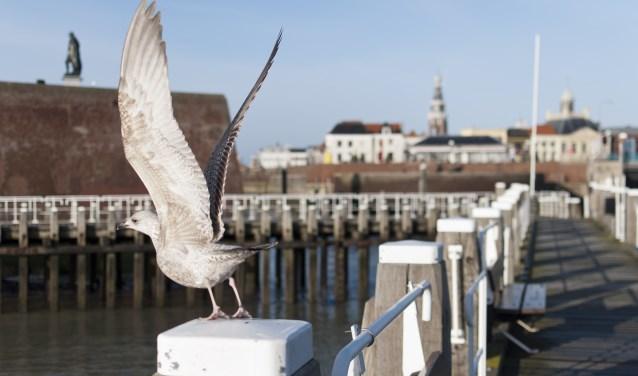 De drie visserijdagen vinden plaats in de haven.