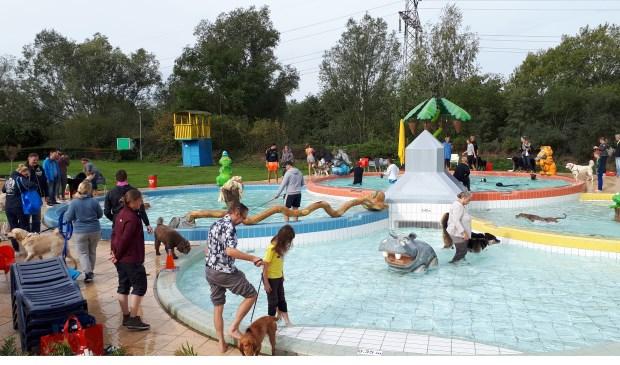 Zwembad De Stok : Honden zwemmen in zwembad de stok roosendaal internetbode