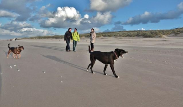 In het naseizoen kunnen honden los rondrennen op het strand.