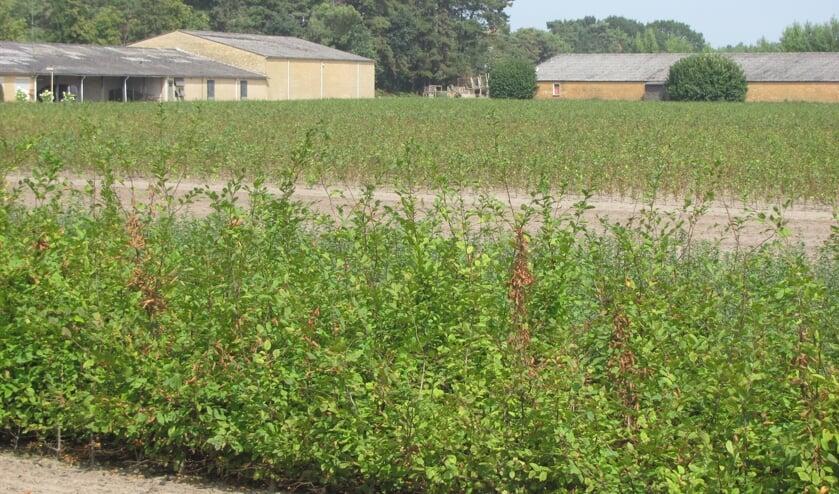 Bij leegstand van vrijstaande agrarische bebouwing ligt onder meer ondermijnende criminaliteit op de loer.