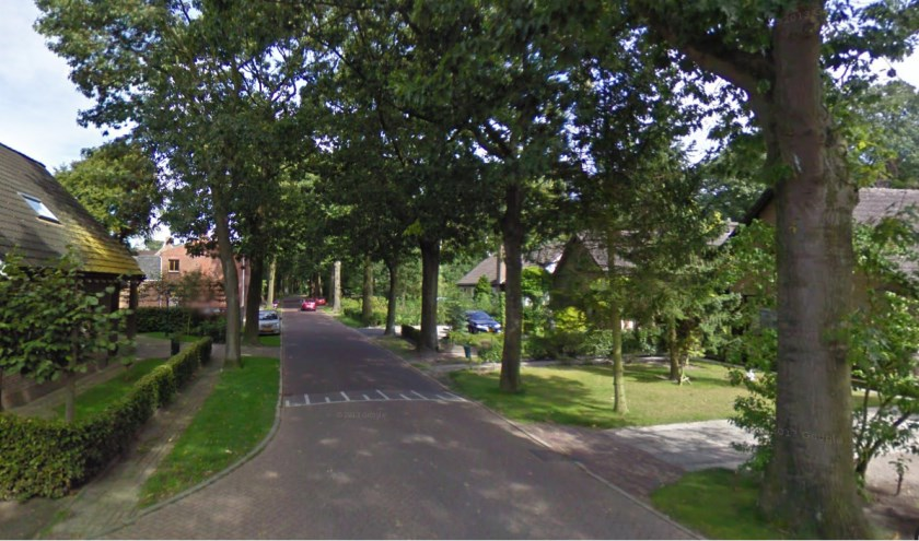 Bomen aan de Hollandseweg