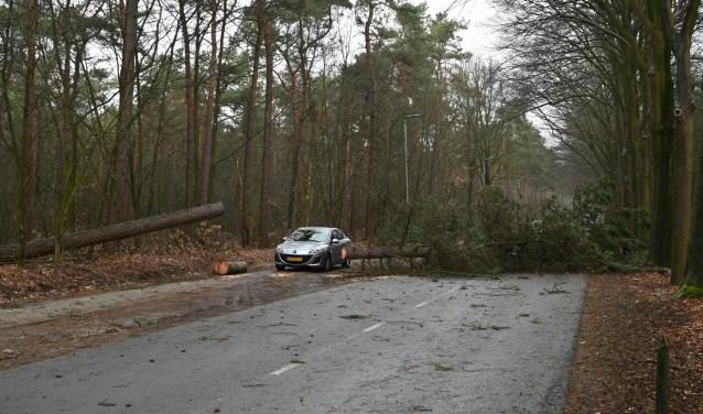 Omgevallen bomen op de Galderse Weg afgelopen zondagmiddag.