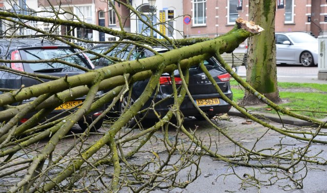 Afgebroken takken van bomen na de eerste storm in 2019 in Breda