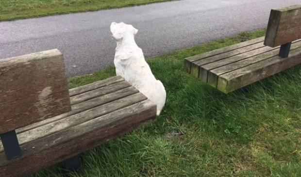 De hond staat op wacht tussen twee bankjes aan de Waterdonken.