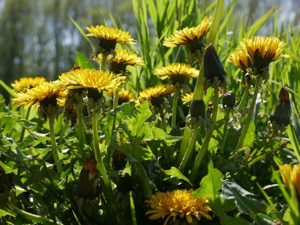 Bloemen in park Valkenberg. Foto: Wesley van der Linde/groennieuws.nl © BredaVandaag