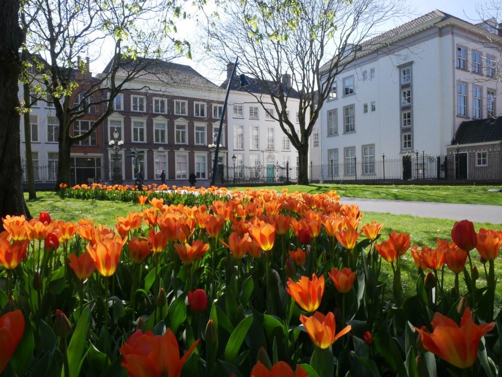 Bloemen in park Valkenberg.