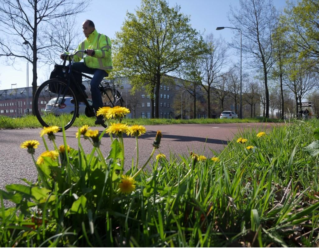 Bloemen in de bermen in Breda Foto: Wesley van der Linde/groennieuws.nl © BredaVandaag