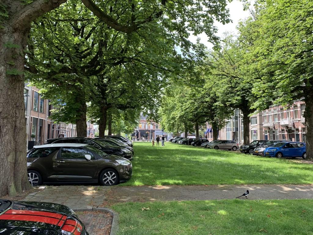 De twintig zieke kastanjes aan de Parkstraat worden gekapt en vervangen door 18 tulpenbomen.
