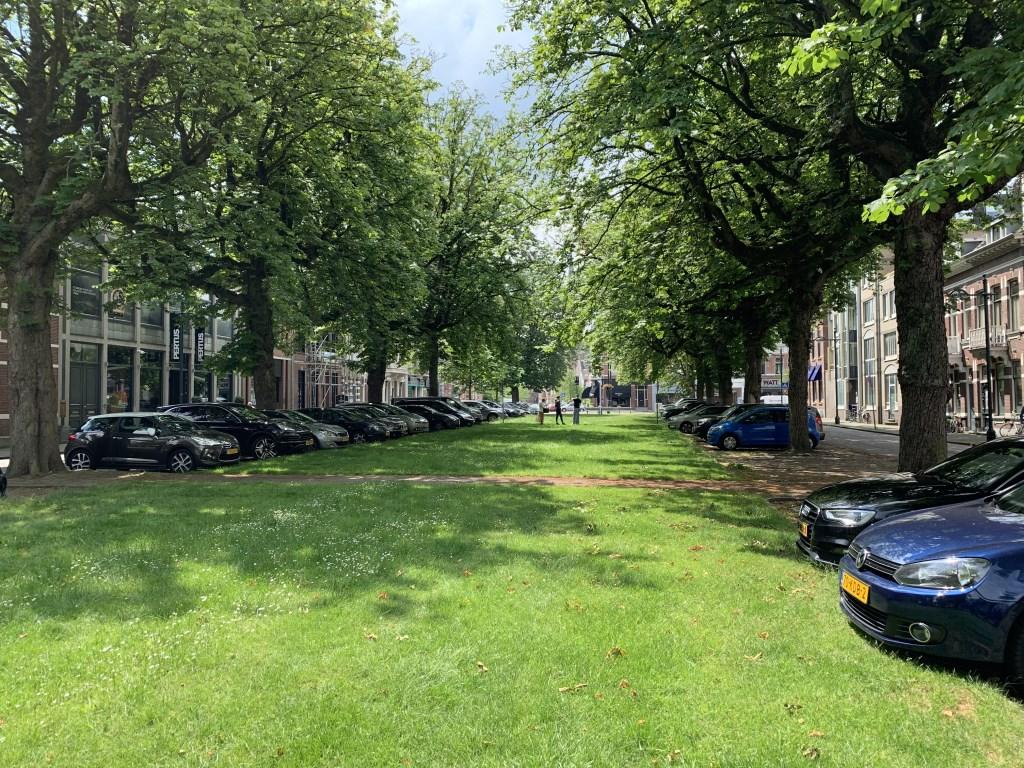 De twintig zieke kastanjes aan de Parkstraat worden gekapt en vervangen door 18 tulpenbomen. Foto: Wesley van der Linde © BredaVandaag