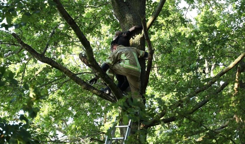 De vrouw werd met een ladder uit de boom gehaald.