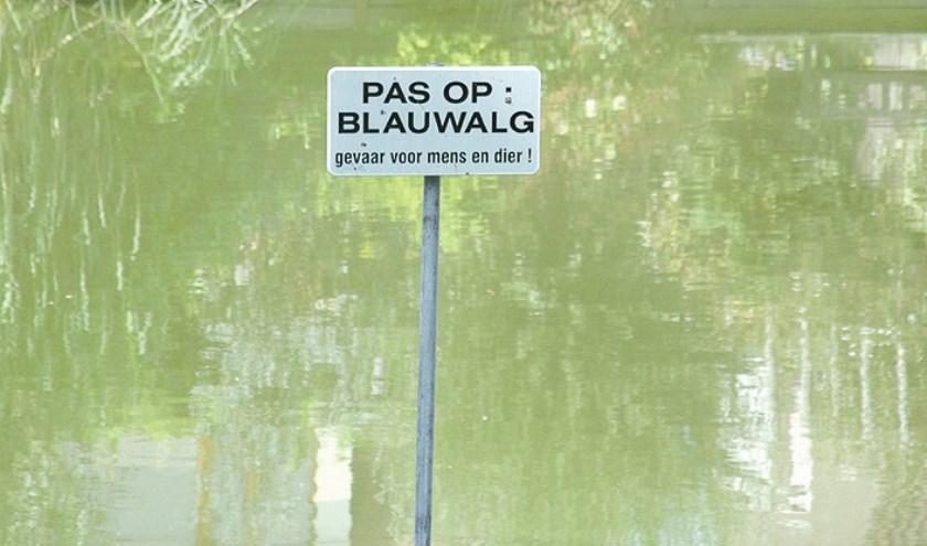 blauwalgen1
