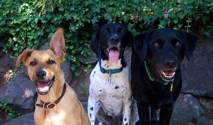 Chassé verandert in hondenbioscoop, maar 'ze begrijpen er niks van'