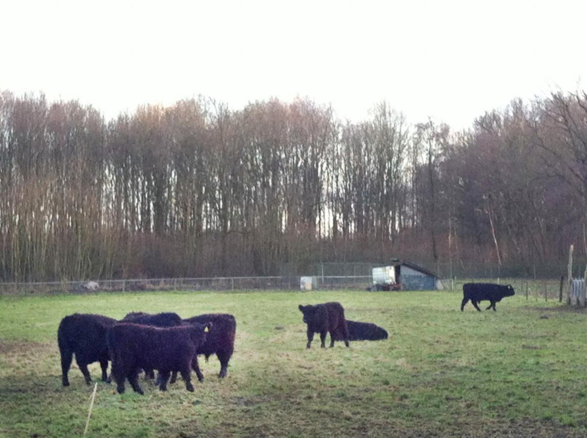 Landgoed De Burgst in de Haagse Beemden. foto Wijnand Nijs