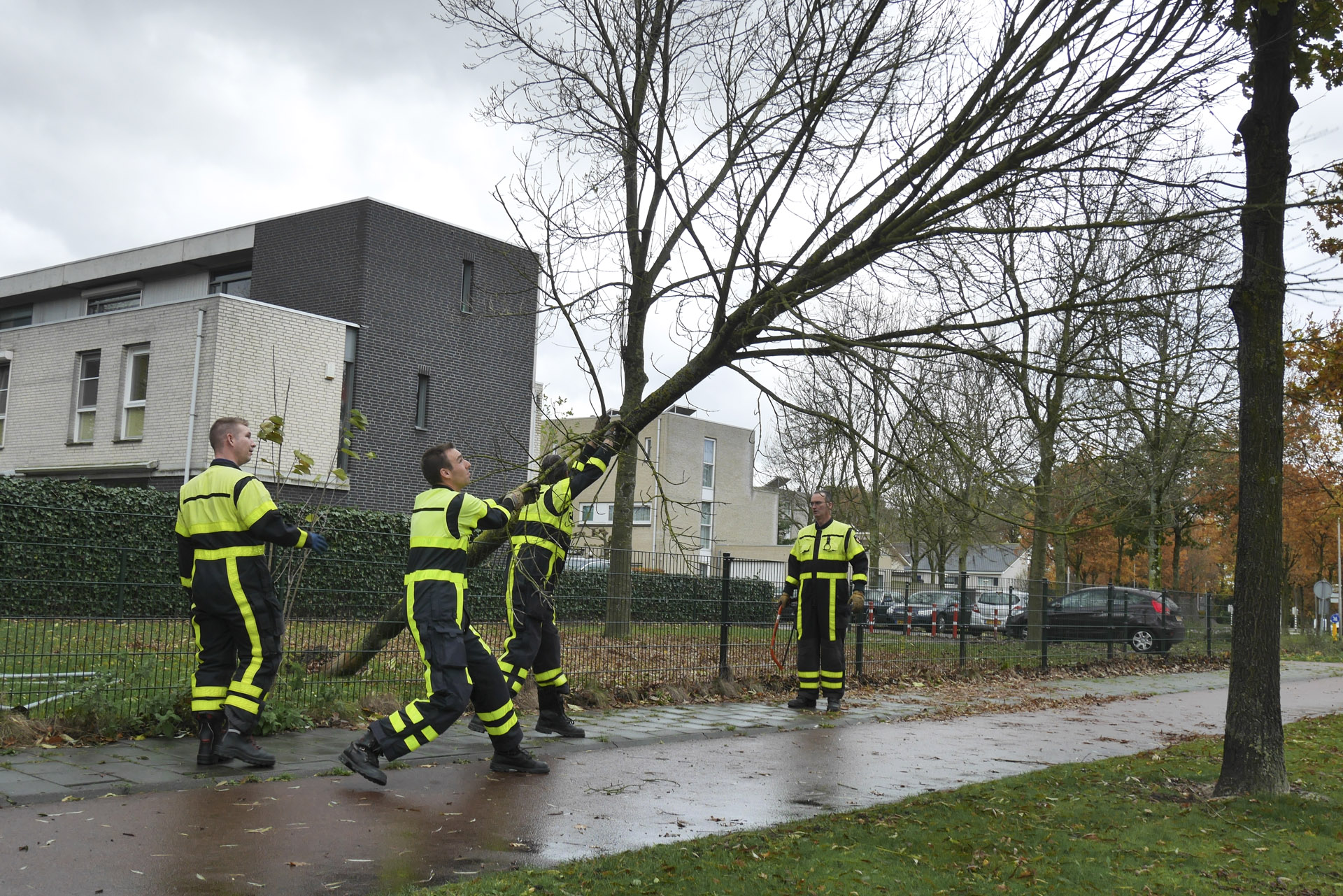 Omgewaaide bomen op verschillende plaatsen in Breda door de flinke najaarsstorm op zondag 20 november.