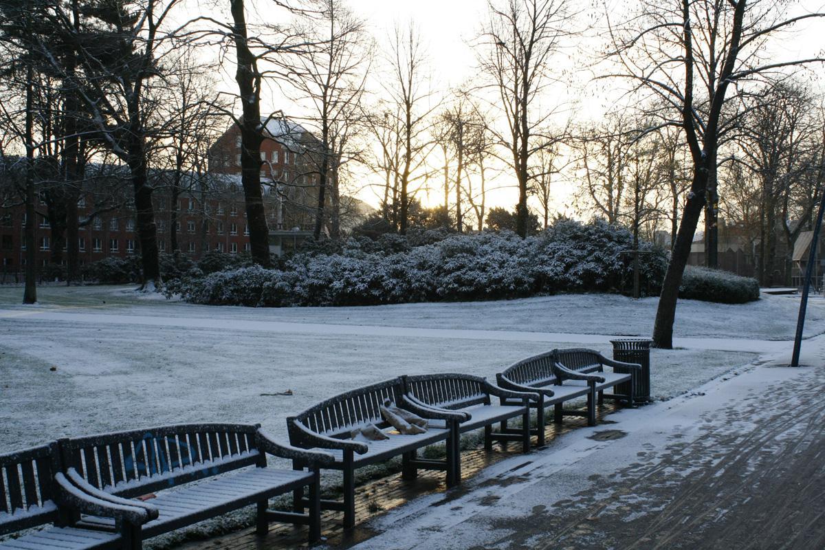 Op 6 december viel er behoorlijk wat sneeuw in Breda. Een korte fotoserie uit het Park Valkenberg. Foto Pepijn Nagtzaam