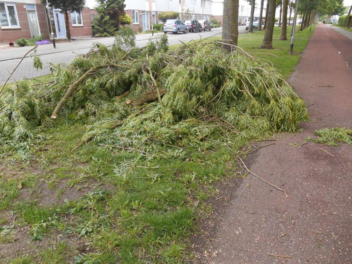 Windschade in de Haagse Beemden