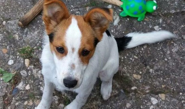 Puppy Kees is al anderhalve maand vermist.