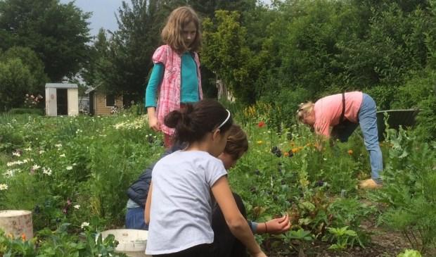 Tuinieren in kindertuin de Boterbloem in Tanthof.