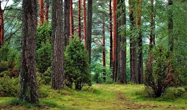 In de natuur worden alle zintuigen aangesproken en al wandelend voel je meer lichamelijke sensaties dan wanneer je stilzit.