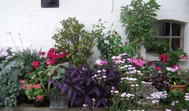 Tuinliefhebbers kunnen in Den Hoorn op ontdekkingstocht gaan.