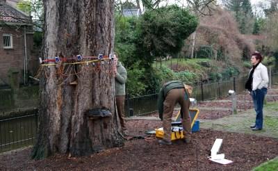 Nieuw onderzoek bij kastanjeboom