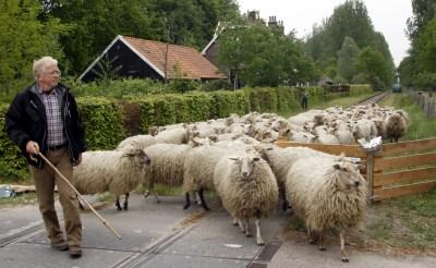 Nieuw schapenseizoen van start