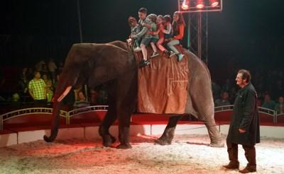 Circus Freiwald imponeert