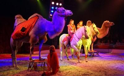 Circus Freiwald langer in Boxtel