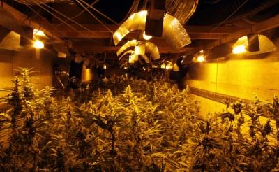 Politie doorzoekt twee drugspanden