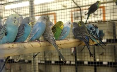 Vogels en huisdieren bij De Notenkraker