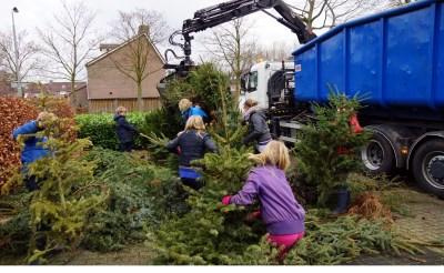 Boxtelse jeugd buiten spel bij inzameling kerstbomen