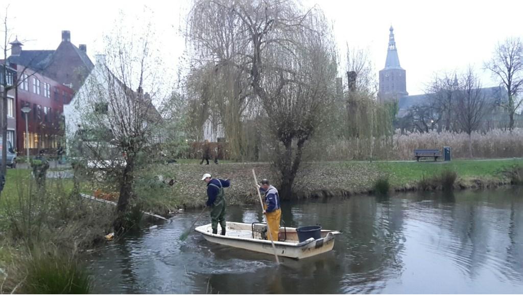 Gemeentevis verhuist naar Vorsenpoel