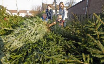 Toch kerstboominzameling in Boxtel