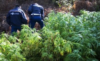Boxtel sluit vijfde drugspand