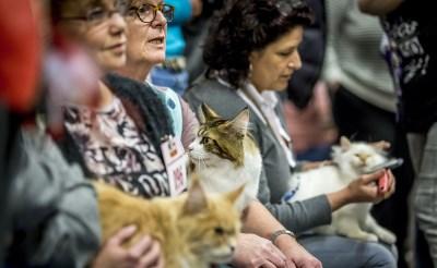 Kattenshow  in De Braken